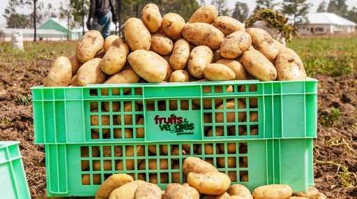 s-potato_small